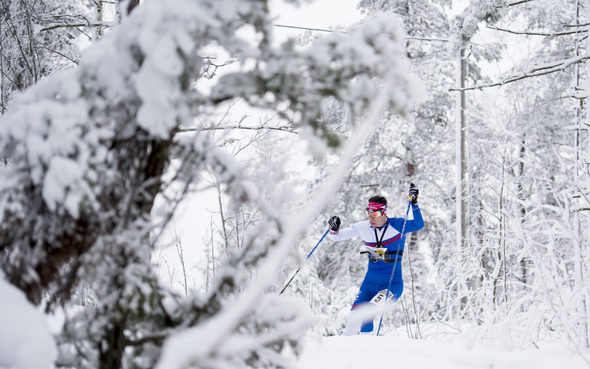 SM-veckan skidorientering 2015, dag 4